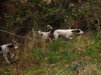 Elevage Danse avec les Loups - eleveur de chiens Ariégeois